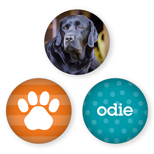 Personalized Dog Refrigerator Magnets
